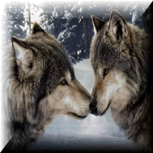 Wolves hi res